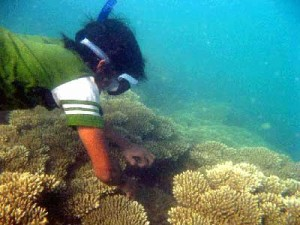 keindahan bawah laut Belitung
